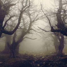Bosques eternos