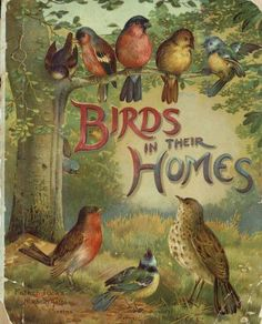 """Birds in their homes"" published by Raphael Tuck & Sons - United States (1885) - book cover"