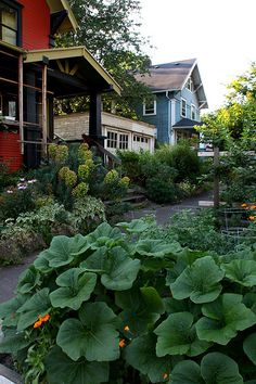 Above image: Portland, Oregon has an inspiring street-side gardening scene that transforms the areas on either side of the sidewalks into one big community garden for all to enjoy.