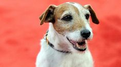 Uggie in the news!