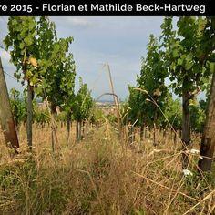 Sélection Prestige Ma Cave Octobre 2015: Dambach-la-ville et un jeune vigneron bio! #vin #alsace #wine #bio #organic #nature #vine #dambach #france #macave