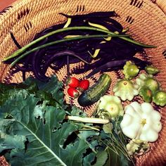 A veggie garden from Down Under! Learn about selecting the right plant for the right place. Organic Gardening, Gardening Tips, Vegetable Gardening, Natural Garden, Garden Pests, Grow Your Own Food, Edible Garden, Garden Planning, Container Gardening