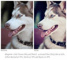 Love the eyes on this dog - need to try this: How to Edit Dog Photographs Using Photoshop Actions: 3 Looks
