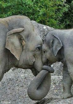 Sweety elephant