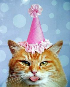 Your Getting Older Birthday Kitty Happy With Cats Images