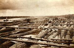 Florida Memory - Close-up view of log rafts in a log boom at Apalachicola, Florida.
