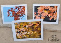 Fall Leaves Card Pack...3 cards... Fall Leaves in North Carolina ...Fine Art Photography Greeting Cards
