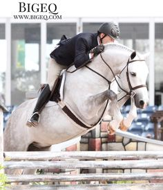 "So many quality sales horses recently added to our site - go look! Find exactly what you want with our powerful custom search. Link in profile! This stunning shot is of Luster & Scott Stewart in the 3'6"" green hunters.  #bigeq #hunterjumper #ushja..."