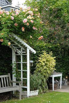 Rose 'Alchymist', Nina Ewald's garden, www.ninaewald.dk