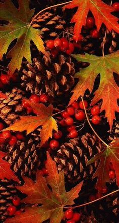 Herbst - autumn pine cones and leaves