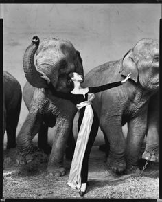 Richard Avedon - Dovima with elephants, evening dress by Dior, Cirque d'Hiver - August 1955