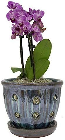 How To Water Your Orchids Correctly So They Don T Die Orchid Pot Orchids Buy Orchids