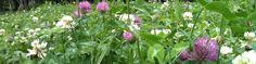 Wise Woman Herbal Ezine with Susun Weed 5/29