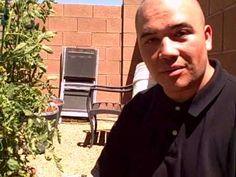Self Watering Tomato Container Gardening in the Las Vegas Desert