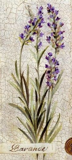 vintage lavendel - Google zoeken