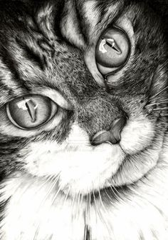 20+ Beautiful Realistic Cat Drawings To inspire you - Fine Art and You - Painting| Digital Art| Illustration| Portrait