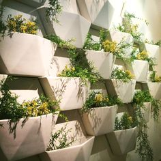 Hex Living Wall Planter System (Set of 3) by Compo Clay | Urbilis