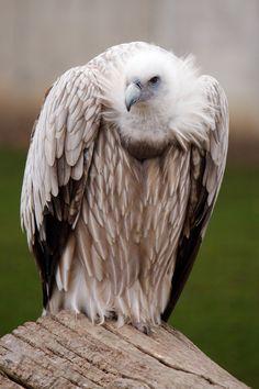 Vulture // photo by Vera Kratochvil