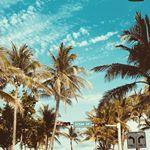 Ocean Drive at Miami Beach 🌴 Ocean Drive, Miami Beach, Usa, Plants, Instagram, Flora, Plant, America, U.s. States