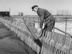 Bedienen eines Nadelwehrs, Ziehen von Nadeln, Altes Wehr Bollingerfähr. Aufnahme ca. aus dem Jahr 1940 bis 1950.