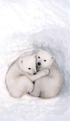 White bear brothers