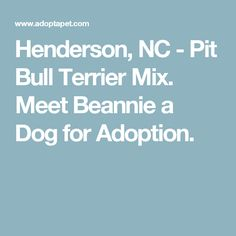 Henderson, NC - Pit Bull Terrier Mix. Meet Beannie a Dog for Adoption.