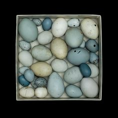 WFVZ egg box    birds eggs, the bird not seen or identified when collected, at the Western Foundation of Vertebrate Zoology    All images available as pigment prints on etching paper,  editioned    Contact Sharon Beals    mailto:sbeals@sha...    link to a story about the nests    www.audubonmagazi...