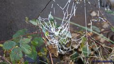 Bevroren spinnenweb