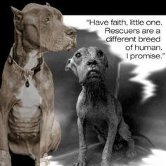 """""""Have faih, little one. Rescuers are a different breed of human. I promise."""""""