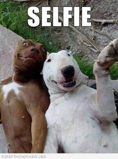 The dog on the left looks like chris tucker from the rush hour movies and that makes it even funnier!!!