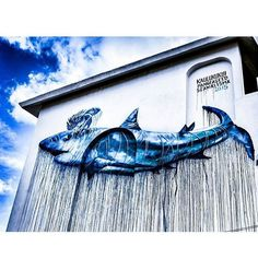Great shot of amazing mural by our guest artist @artworkofkai (Hawaii) - his massive shark conservation themed mural during the festival in Cozumel, Mexico highlights the importance of rethink our perceptions about these incredible creatures. Science estimates the oceans could be void of sharks in the next 10-20 years if destructive fishing/consumption practices continue. Sharks are the ultimate apex predators and have shaped and balanced the delicate ocean ecosystem for over 400 million…