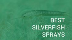 Silverfish aren't dangerous but they are still unpleasant to have around. So here's a list of the best silverfish spray for repelling them currently around. Best Pest Control, Bug Control, Wasp Nest, Household Pests, Bees And Wasps, Humming Bird Feeders, Sprays, Helpful Hints, Tips
