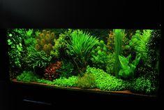 My current Dutch Aquarium