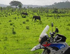 (2) Tumblr Tanzania Africa Elephants during overland motorcycle tour