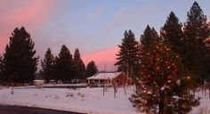 Sunset at the tasting room, complete with Christmas tree.