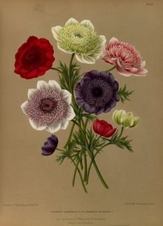 Beautiful botanical prints. This website has a lot of old botanical books which all can be downloaded!
