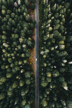 Tiny Car or Just Really Big Trees?  by Allie M. Taylor