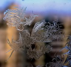 Nature's art - Frost begins to form on glass - Imgur