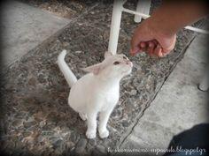 Feeding a cute kitten