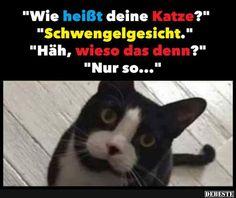 Wie heißt deine Katze?