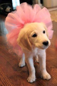 Ballerina Pup