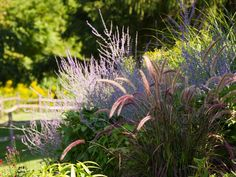 Low-Maintenance Plants and Dwarf Shrubs | DIY Get Rid Of Dandelions, Ways To Save Water, Dwarf Shrubs, Fountain Grass, Small Shrubs, Rain Garden, Hillside Garden, Ornamental Grasses, Tall Grasses