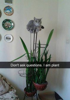 One of the Best collections of funny animal pictures,Cute funny animals, Funniest animals you'll see all day. Just look Funny Web Zone Best Animal Pictures Picdump of The Day 9 that will make you smile 17 funny animal pics. Funny Animal Jokes, Funny Cat Memes, Cute Funny Animals, Funniest Memes, Memes Humor, Animal Humor, Pet Memes, Funny Captions, Funny Pranks