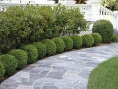 Information about front yard landscaping ideas, simple design for low maintenanc. - Information about front yard landscaping ideas, simple design for low maintenance garden and house flower small beds landscape with pictures Boxwood Landscaping, Small Front Yard Landscaping, Front Yard Design, Landscaping With Rocks, Backyard Landscaping, Backyard Ideas, Landscaping Melbourne, Luxury Landscaping, Landscaping Company