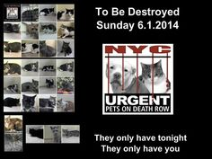 """**ATTENTION** New Hours for NYC AC&C """"At Risk"""" (TO BE DESTROYED) ListStarting 7/24/13, the NYC AC&C has changed the hours that the """"To Be Destroyed"""" animals will be available for rescue/adoption. The list will be released at 6PM (not 5PM,) but you will have access to their website (to """"reserve"""") until 12PM (NOON) the following day. Hopefully, the extra hours will give us an opportunity to save more lives. The shelter closes at 8PM but reopens at 8AM. You will be able to reserve animals on…"""