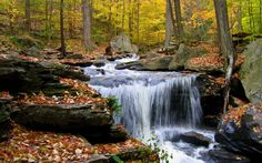 Forest With Small Stream | forest, small, stream, wallpaper, waterfall - 243708