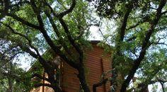 Una cabaña en un árbol. Ecolodge de Cabañeros - Retuerta del Bullaque, Turismo rural ecológico; excursiones.