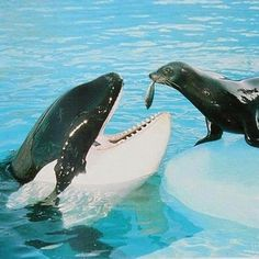 I wish they wouldn't call me a Killer Whale, I'm actually a dolphin...that's all I'm saying...and I do have a gentle side.