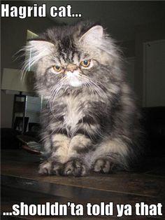 Hagrid cat, hahaha