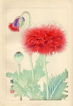 Spider Poppies, by Chigusa Soun 千種掃雲 (Japanese, 1873–1944). Woodblock print